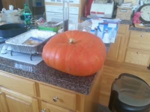 cinderella pumpkin